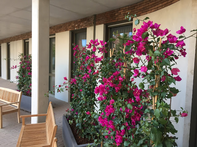 planten-en bloemenverhuur voor bedrijven, planten voor terras inkom buiten
