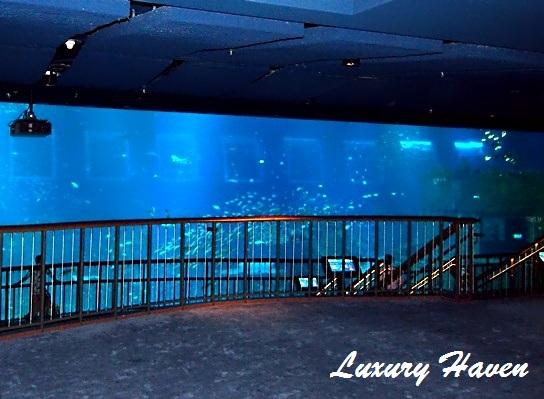 rws marine life park