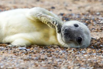 Tierna foto de lobo marino bebe descansando