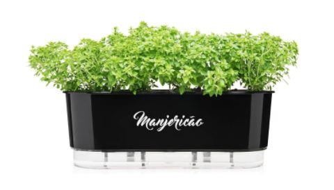 Vasinho de manjericao para plantar manjericao