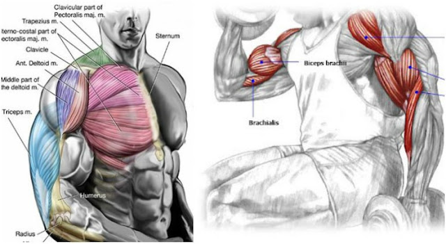 5 Training Techniques For Muscle Fullness & Roundness