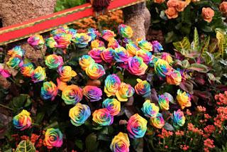 Tuyển chọn những hình ảnh đẹp về các loài hoa