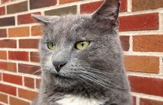 This is the picture of an angry cat