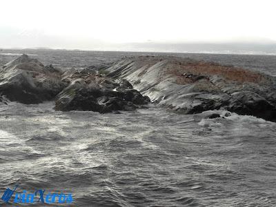 isla de los lobos - canal Beagle