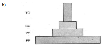 Draw a grassland pyramid to substantiate your answer