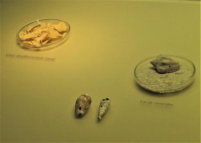 コカの葉と貝殻