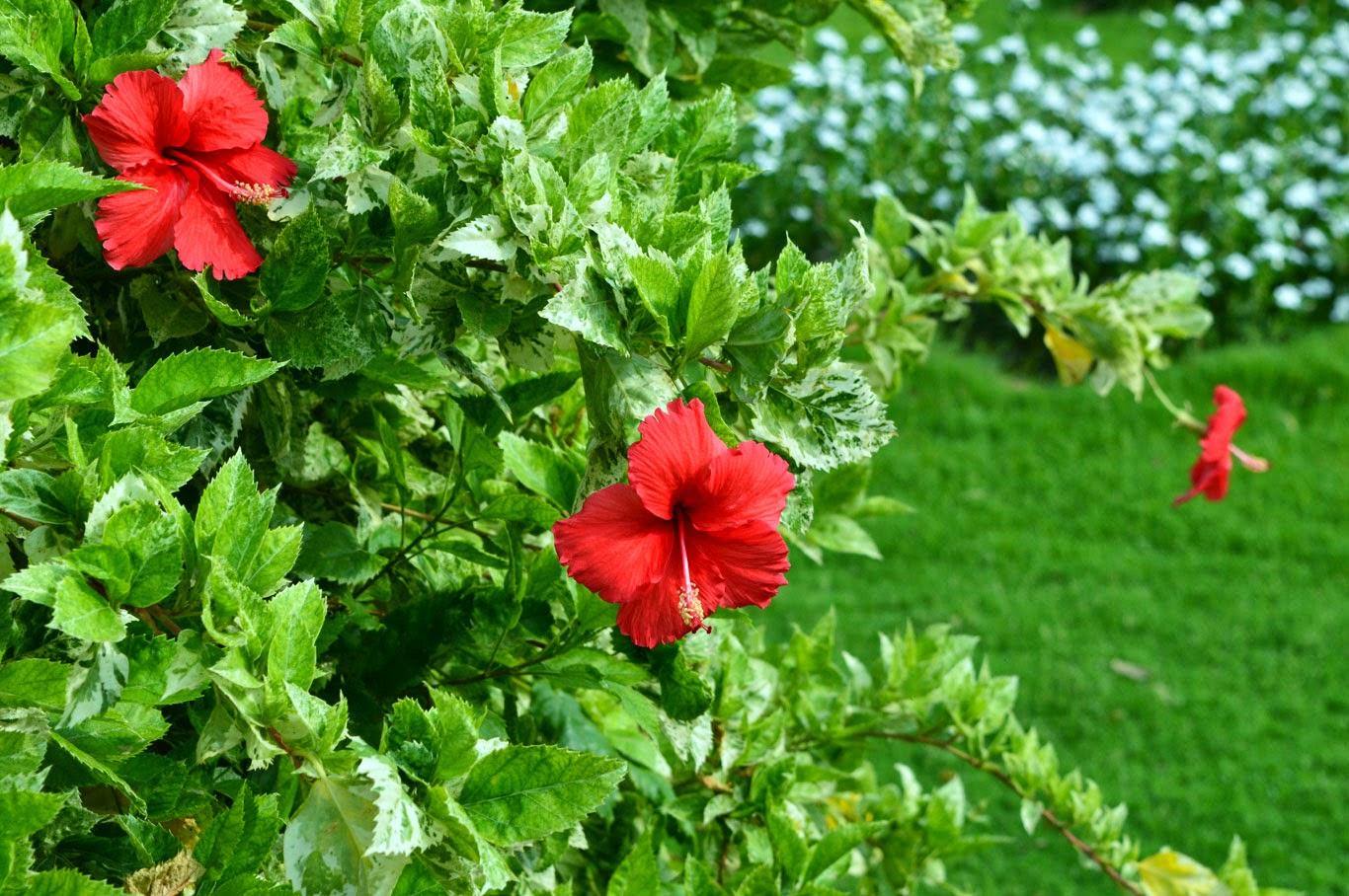Design Your Own Garden Online Free