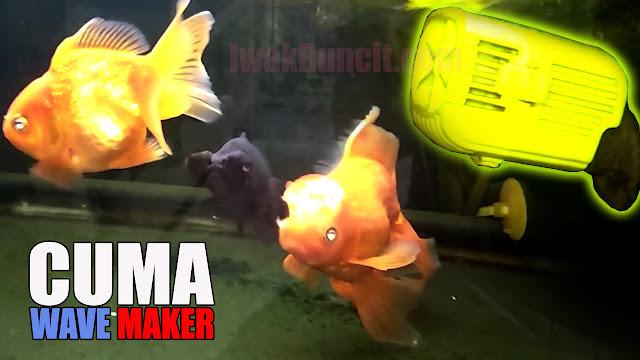 Cuma Wave Maker Tanpa Aerator? Pengalaman 2 Minggu Menggunakan Wave Maker di Aquarium Ikan Mas Koki?