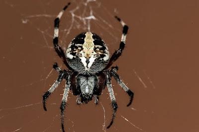 Penanganan Gigitan Laba-laba