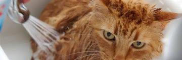 7 Tips dan Cara Memandikan Kucing Anggora yang Takut Air