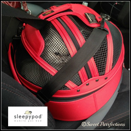 Truffle is safe and comfortable in her red Sleepypod
