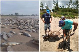 https://vnoticia.com.br/noticia/4248-inea-faz-analise-da-agua-apos-mortandade-de-peixes-em-lagoa-doce-e-guriri