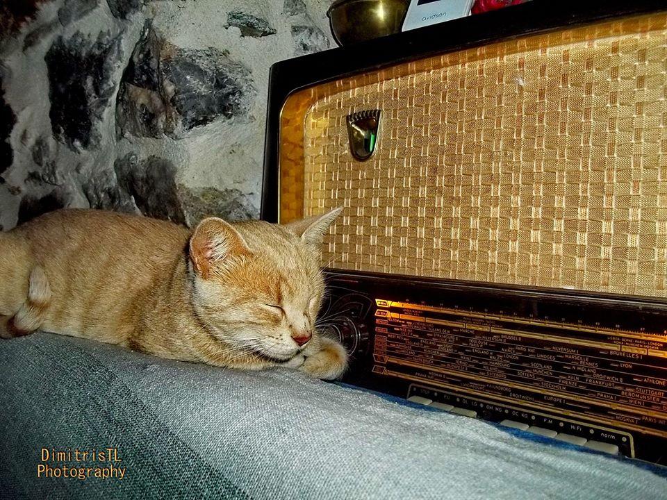 γάτα από την Εύβοια