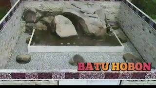 "Misteri Dan Legenda di Balik Batu Hobon Tempat Pusaka Siraja Batak   Dolok Pusuk Buhit adalah satu tempat yang banyak menyimpan cerita bersejarah, Pusuk Buhit terletak di Desa Limbong-Sagala, Kecamatan Sianjur Mula-mula, Kabupaten Samosir, berjarak sekitar 11-12 km dari Pangururan.          Menurut kepercayaan masyarakat Batak, Pusuk Buhit adalah sebagai tempat asal-muasal seluruh Suku Batak tepatnya di Sianjur Mula-Mula.     Dalam perkembangannya, nenek moyang Suku Batak menyebar ke Desa Nawalu (delapan penjuru mata angin). Pada perbatasan Kampung Sagala dan Limbong (Sibumbung rumah) terdapat sebuah tempat keramat yang dianggap sakral bagi masyarakat setempat, bernama ""Batu Hobon"".      Batu Hobon Samosir Pusuk buhit     Dinamai batu ini batu hobon tentu dengan satu alasan bahwa batu ini berbentuk seperti hobon (peti) dan tutupnya berbentuk Cinta (Love). Dalam budaya Batak Toba, Batu Hobon diyakini sebagai tempat di mana pusaka Si Raja Batak tersimpan. Di dalamnya ada kitab pengobatan, senjata, alat musik dan juga beberapa barang bernilai ekonomis. Secara khusus Batu Hobon tidak lepas dari kisah tentang Saribu Raja.     Saribu Raja adalah cucu dari Si Raja Batak. Diceritakan, Saribu Raja mewarisi sebagian besar pusaka Si Raja Batak yang diwariskan secara turun temurun. Tetapi ketika akan pergi merantau, pusaka itu ia simpan di dalam sebuah batu.     Melalui meditasi, ia membelah sebongkah batu kemudian menutupnya lagi. Konon ia bertitah, batu itu tidak akan bisa dibuka sampai tiba pada waktunya. Cerita itu diwariskan secara turun temurun kepada generasi selanjutnya."