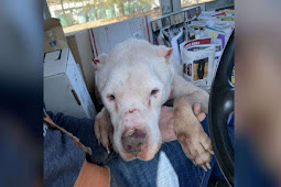 """Dog Was Thrown Out In Extreme Temperatures For Being """"Old & Useless"""""""