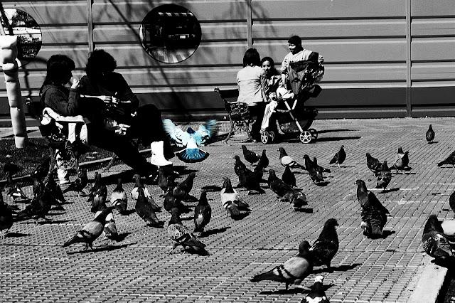 Gente sentadas en banco de plaza rodeadas por palomas.