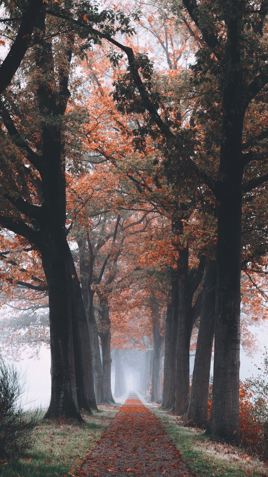 Autumn road in the morning