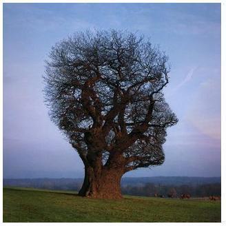 رأس شجرة الراتب العاطفي