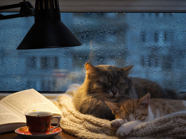 Teach, engage and amplify positive training methods. Photo shows cats curled up by window on rainy day
