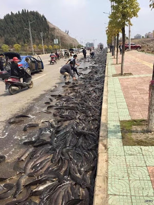 The Real Story Behind The 'Fish Rain' In Thailand (PHOTOS)