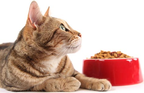 Organic Pet Food: Is There Such a Thing