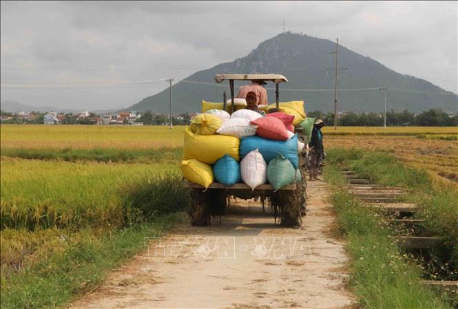 lúa nông dược việt nam