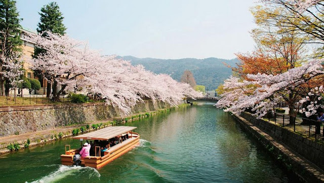 Blossom Kyoto