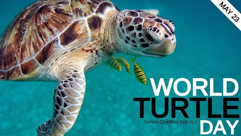 22 [Best] World Turtle Day 2021: Quotes, Sayings, Messages, Greetings, Facts, Images, Pictures, Photos, Wallpapers