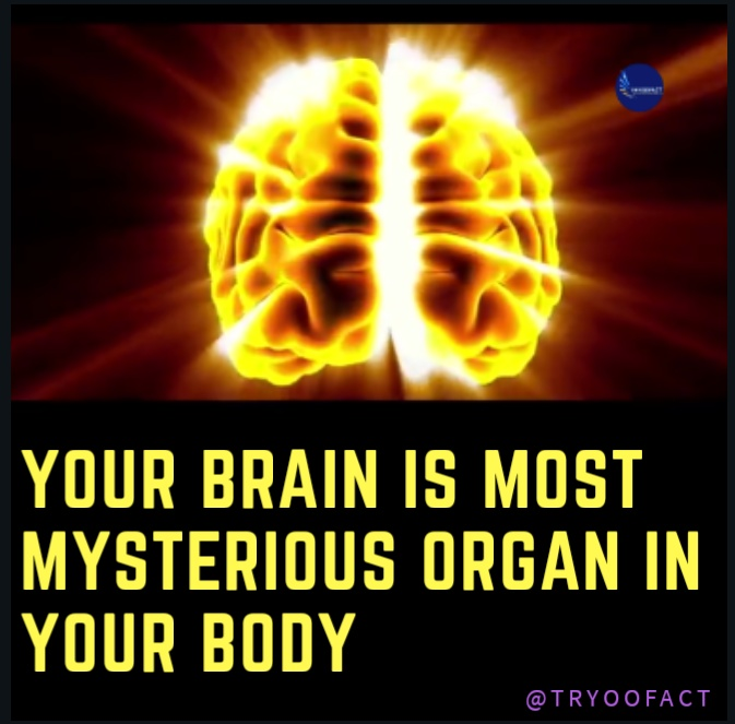 Most Interesting Facts >> Recent Interesting Facts About The Brain Psychology