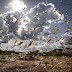 Pakistan braces worst desert locusts attack that spread across the country