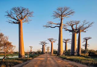 best time for Madagascar Honeymoon