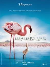Grande Balé Vermelho: O Mistério Dos Flamingos
