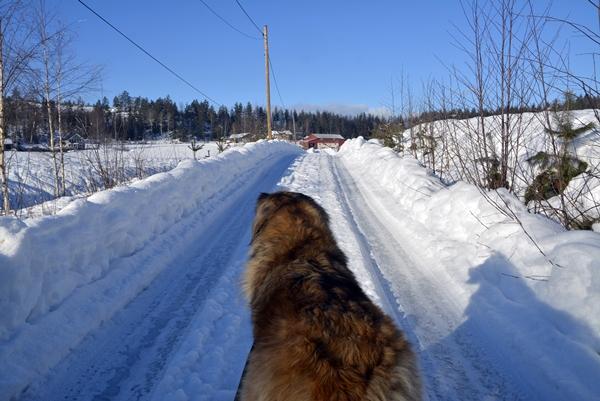 vinter tur