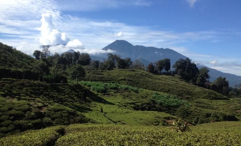 Gunung Kencana Tempat Istimewa Menikmati Keindahan Bogor dari Ketinggian