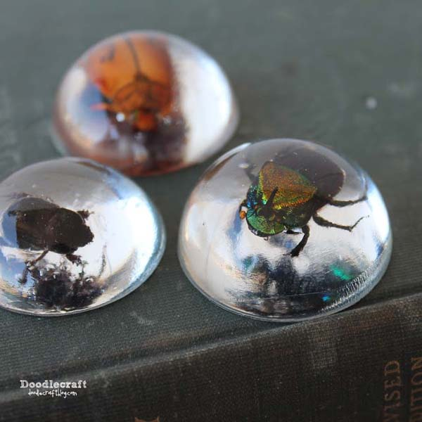 Beetles or bugs in clear resin for paperweights or pendants