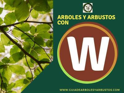 Lista de arboles y arbustos que empiezan con la letra W