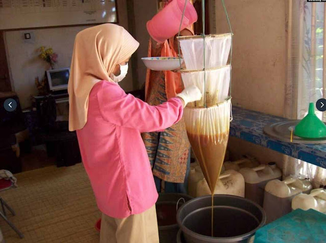 Ancaman Masa Depan Lebah Resahkan Masyarakat dan Pertanian Indonesia