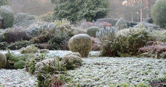 A very cold, frosty morning walk (Coombe Wood)