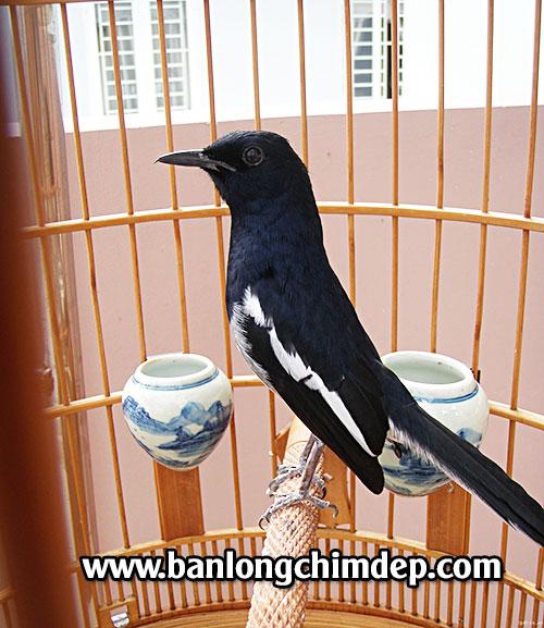 lông chim biên hòa