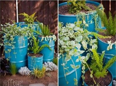 Manfaatkan drum minyak jadi pot tanaman.