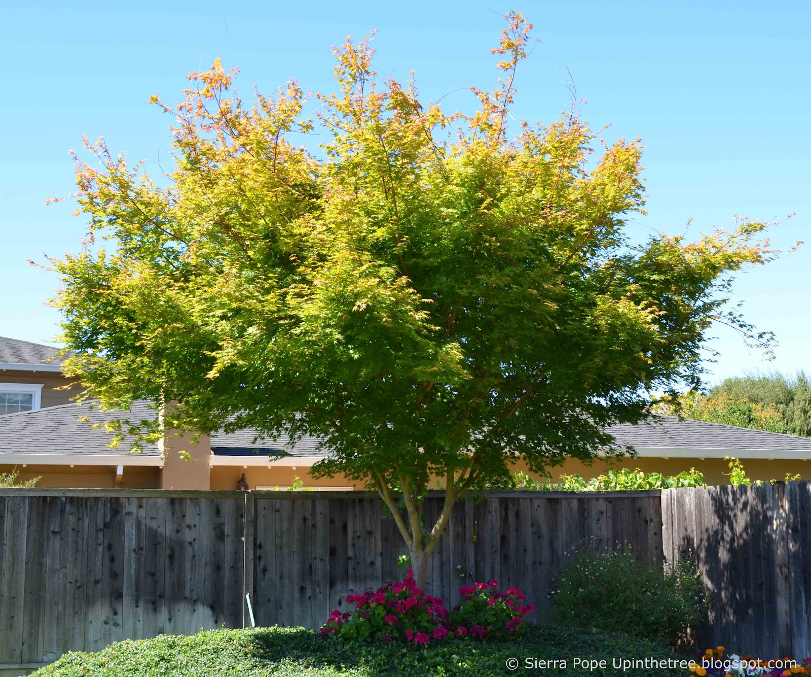 Trees For Small Backyard: Up In The Tree: Foliage Fun (Part 1