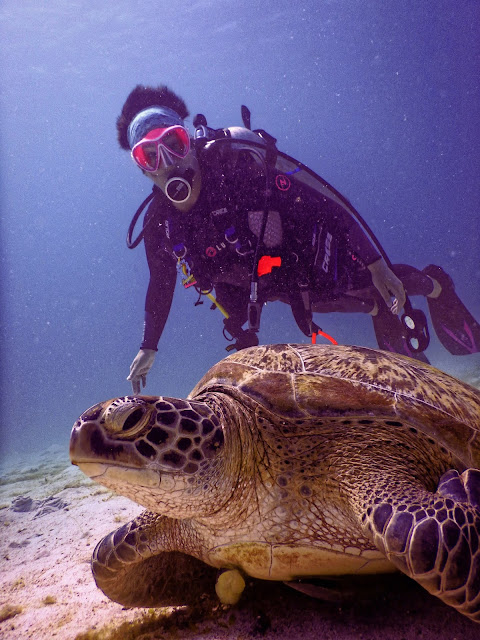 Underwater Photography in 4K - Pics-Directory