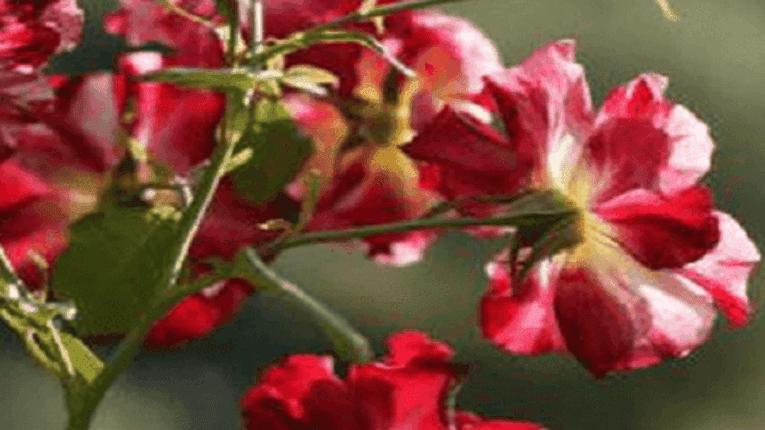 Puisi Semakin Rindu Kekasih yang Hilang