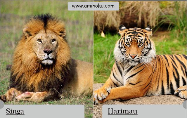Perbedaan antara singa dan harimau