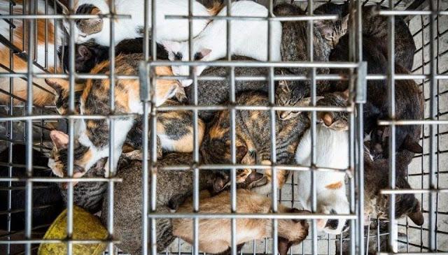 Chính thức cấm giết mổ chó mèo trên toàn lãnh thổ Việt Nam, mức xử phạt lên tới 5 triệu đồng