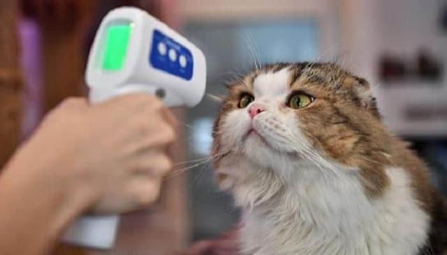 إصابة أول قطة بفيروس كورونا في بريطانيا