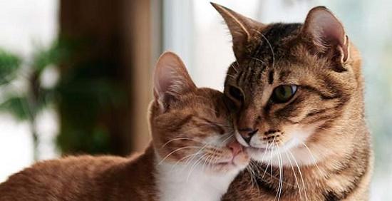 Penyebab Kucing Mati Mendadak