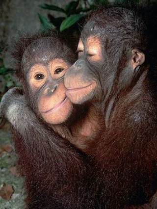 What are APES? What do Apes Look Like? Where Do Apes Live?