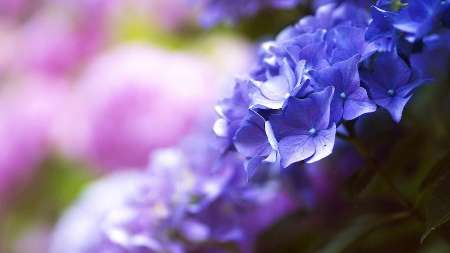 Purple Flower Close Up Nature 4k 3840x2160 Wallpaper 84