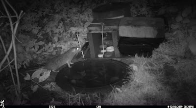 hedgehog rat bait station